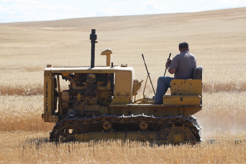 Vintage Harvesting Demonstration