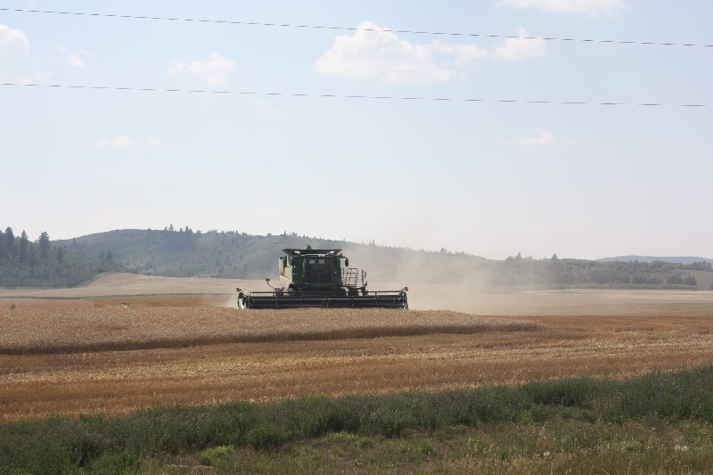 Harvesting in Swan Valley