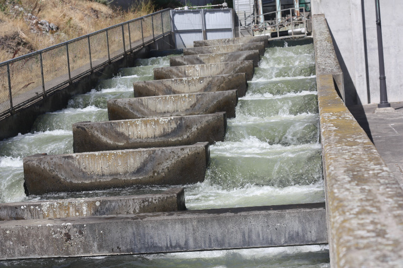 Salmon Ladder, Lower Granite Dam