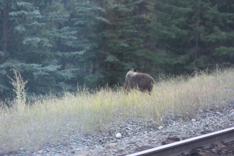 View from train - a BEAR!