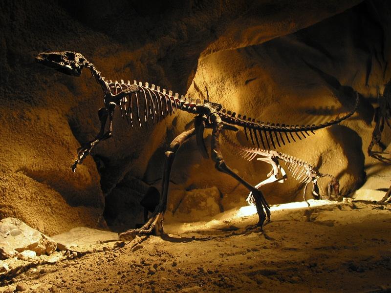 large_dinosaur.jpg