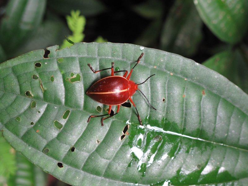Tiputini Biodiversity Station 154