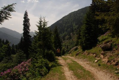 ayder_03_06_2010__16_.jpg
