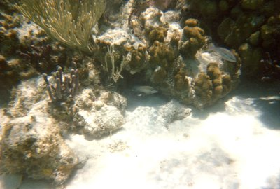 Snorkeling - Coral Reef - Colorful Fish