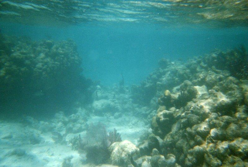 Snorkeling - Coral Reef