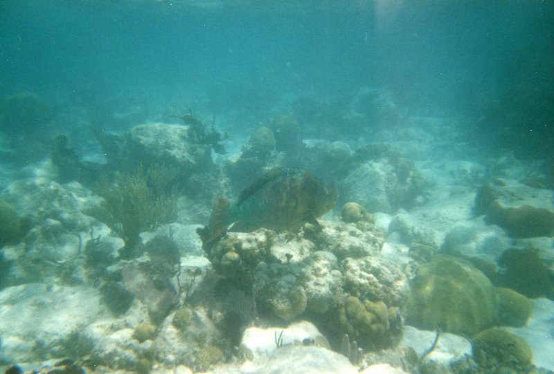 Snorkeling - Coral Reef - Ugly Fish