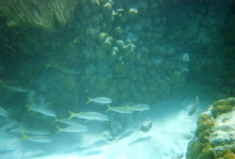 Snorkeling - School of Silver Fish