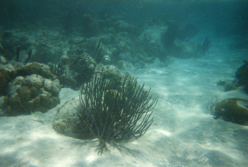 Snorkeling - Coral Reef - Coral Fingers