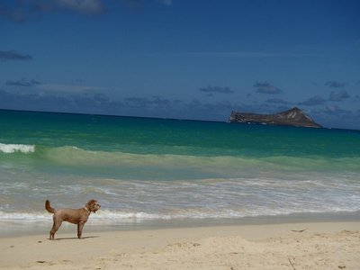 Calla at waimanalo beach
