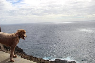 Calla overlooking the ocean