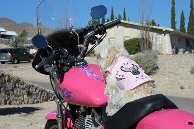 Emma and the pink bike