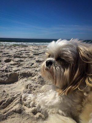 Emma enjoying the salty breeze