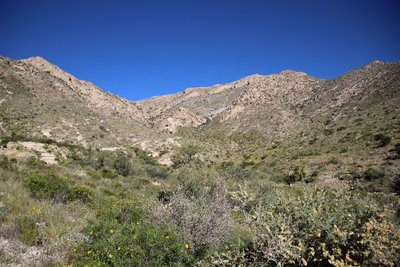 Ron Coleman Trail