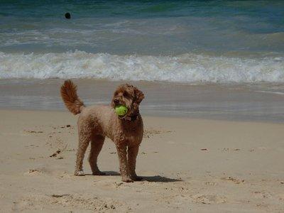 calla at the beach
