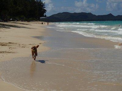 calla running on the beach