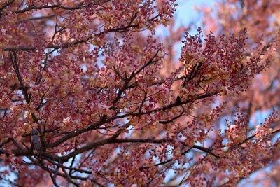 dry season blossoms