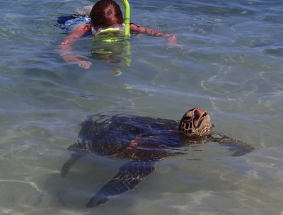 girl snorkeling with turtle