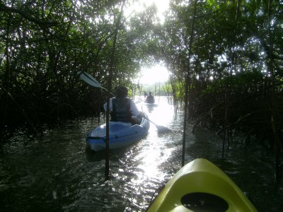 kayaking thru mangroves