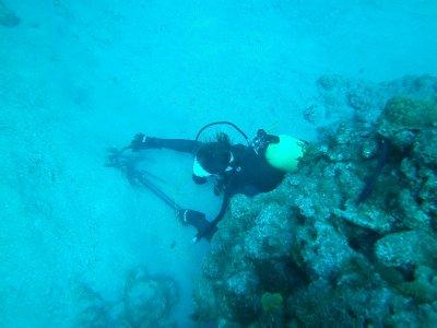 killing lionfish