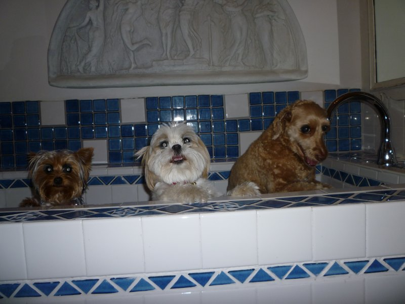 girls in the bathtub