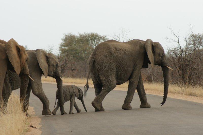 Africa Oct 09 287