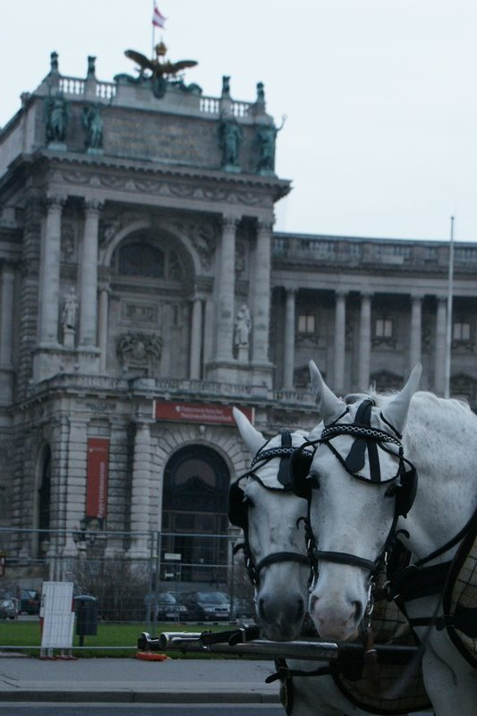 horses at Hofburg palace