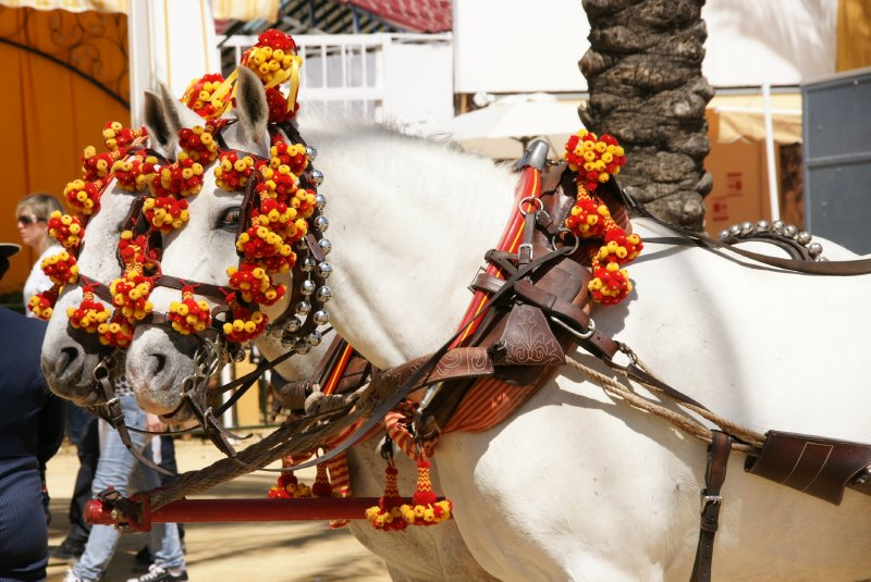 Jerez horses
