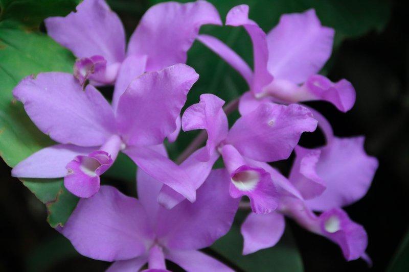 large_National_flower.jpg