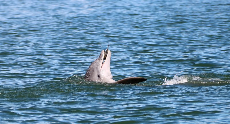 large_dolphin_ea..sh__1_of_1_.jpg