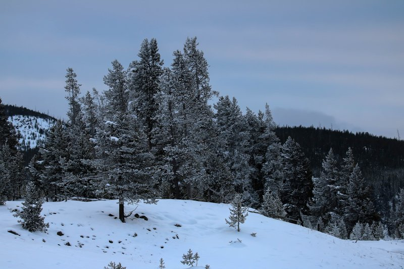 large_frosty_trees__1_of_1_.jpg