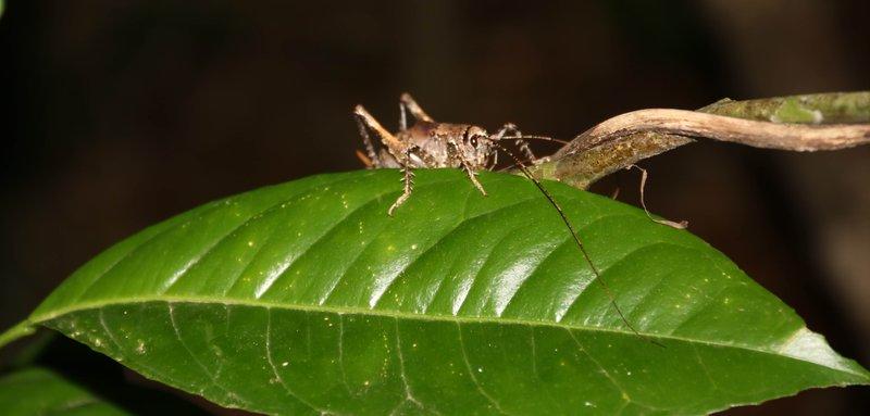 large_grasshopper.jpg