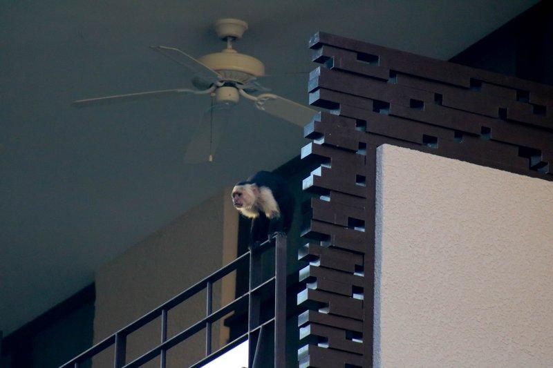 large_hanging_ou..the_balcony.jpg