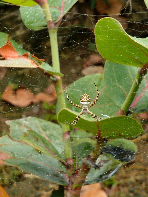 large_huge_spider__1_of_1_.jpg