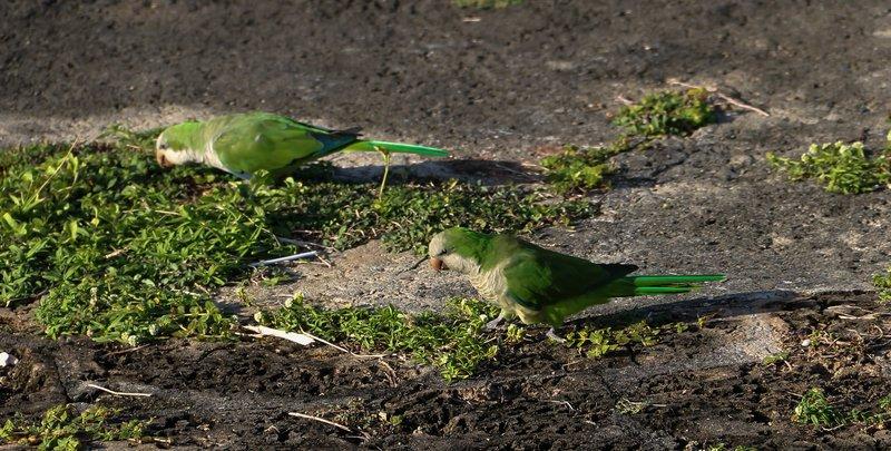 large_parrot_or_..et__1_of_1_.jpg