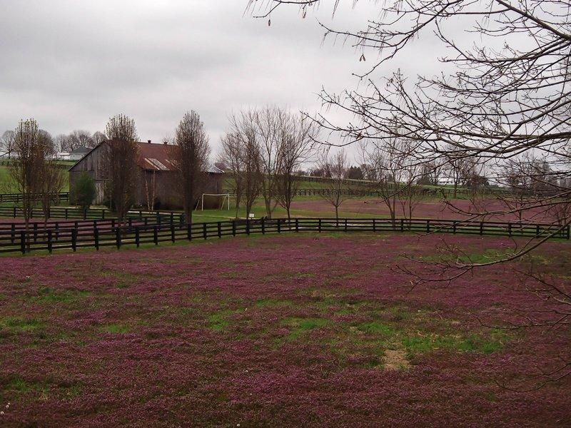 large_purple_weeds.jpg
