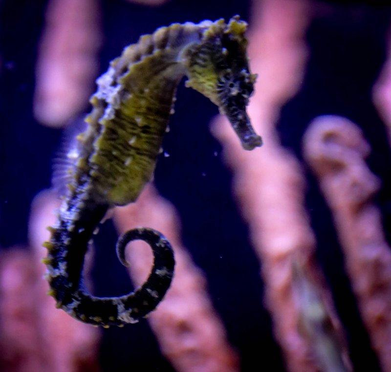 large_seahorse__1_of_1_.jpg