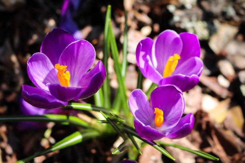 large_spring_flowers__1_of_1_.jpg