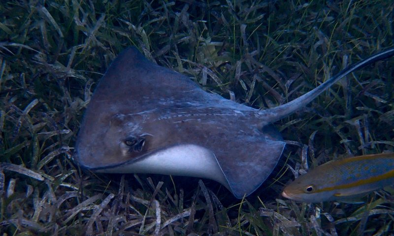 large_stingray__1_of_1_.jpg