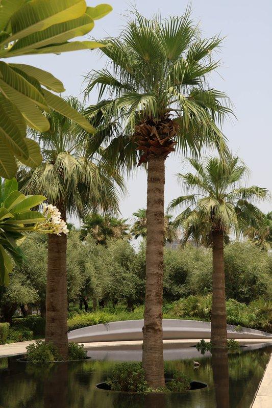 large_trees_in_Martyr_Park.jpg