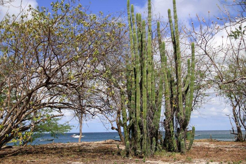 large_view_of_Jobo_beach.jpg