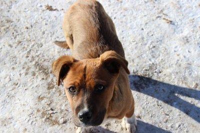 pueblo puppy