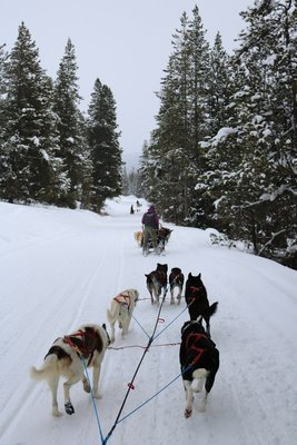 sled dog trail
