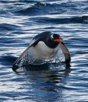 penguin leaps