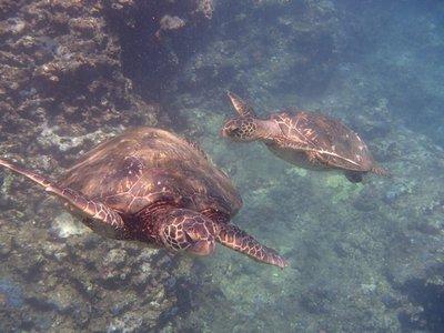 turtle family 2
