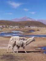Bolivia_Uy.._3__29_.jpg