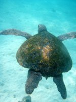 Galapagos_.._4__34_.jpg