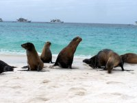 Galapagos_..d__102_.jpg