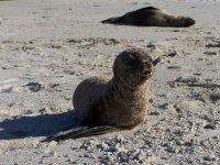 Galapagos_..d__105_.jpg