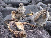 Galapagos_..nd__18_.jpg