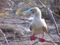 Galapagos_..nd__32_.jpg